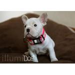 Illumidog.com