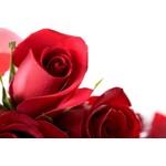 MR Roses Flower Company